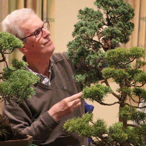 Bonsai Club at KWMCC